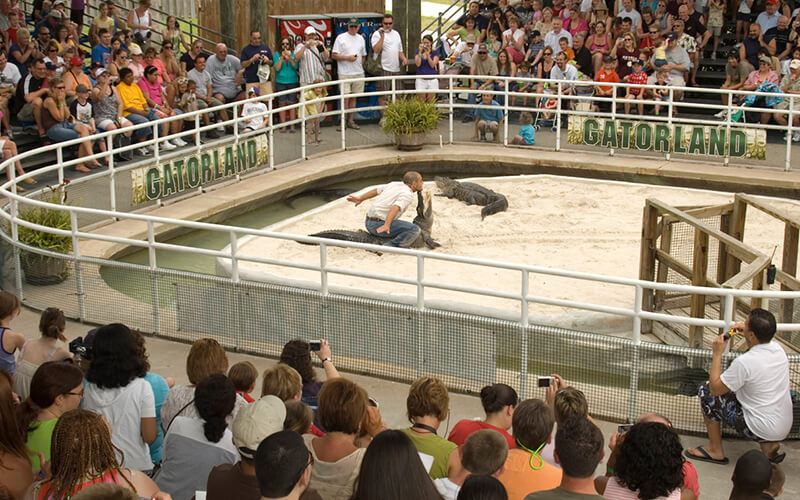 Gators performing at Gatorland in Kissimmee, Florida