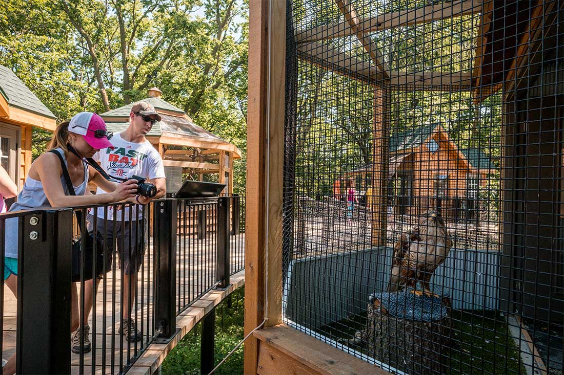 A couple photographs a raptor in an enclosure at the Raptor Woodland Refuge at Fontenelle Forest near Omaha, Nebraska