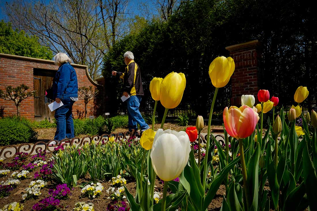 An elderly couple looks at a plant bed with tulips in the foreground at the Lauritzen Gardens in Omaha, Nebraska