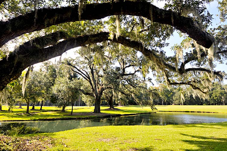 Moss-covered oak trees beside a reflecting pond at Drayton Hall in Charleston, South Carolina