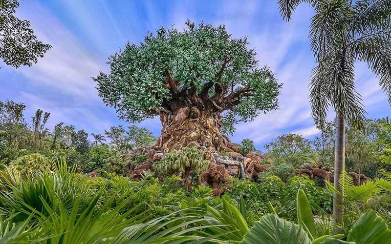Tree from Animal Kingdom near Kissimmee, FL